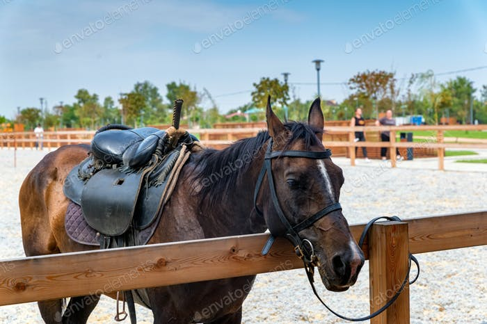 View of brown saddled horse at the hitching post