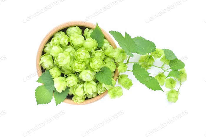 Hop cones (Humulus) on a wooden bowl isolated on white backgroun