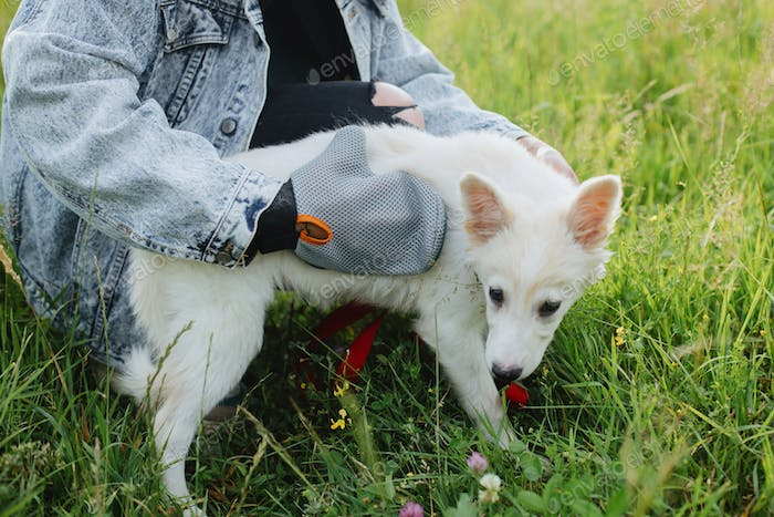 Woman combing puppy hair with special deshedding glove in summer park