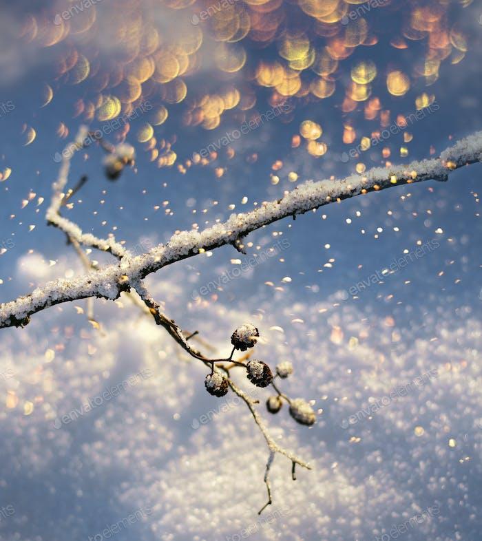 Frozen twig colorful snowfall, winter season concept