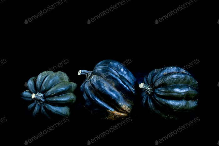 Close up of three dark blue ribbed pumpkins on black background.