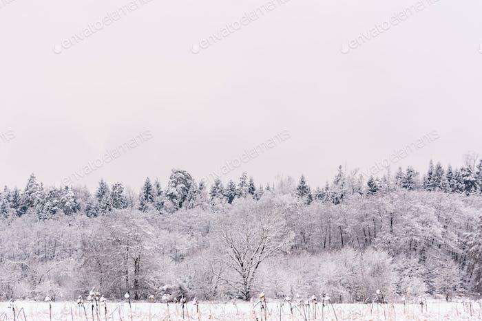 Weiße Winterlandschaft Wald und Felder Landschaft