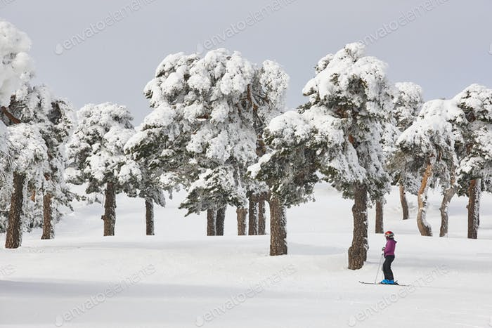 Skiing on a forest slope. White mountain landscape. Winter sport