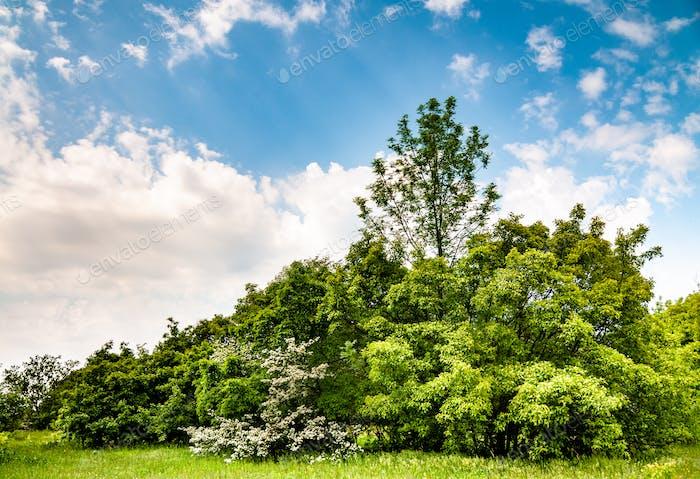 Beautiful scenic landscape of green trees field