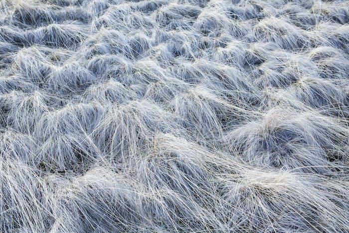 Frost bedeckte Wildgräser