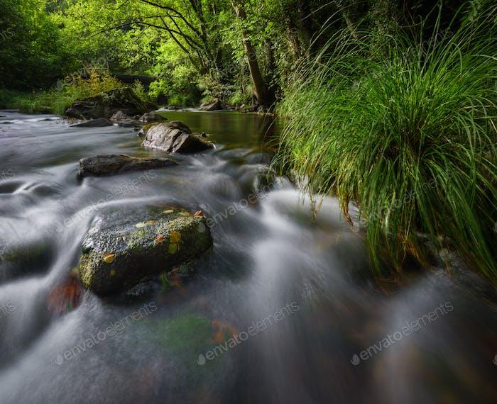 Beginn des Herbstes, in einem Fluss zwischen Wäldern