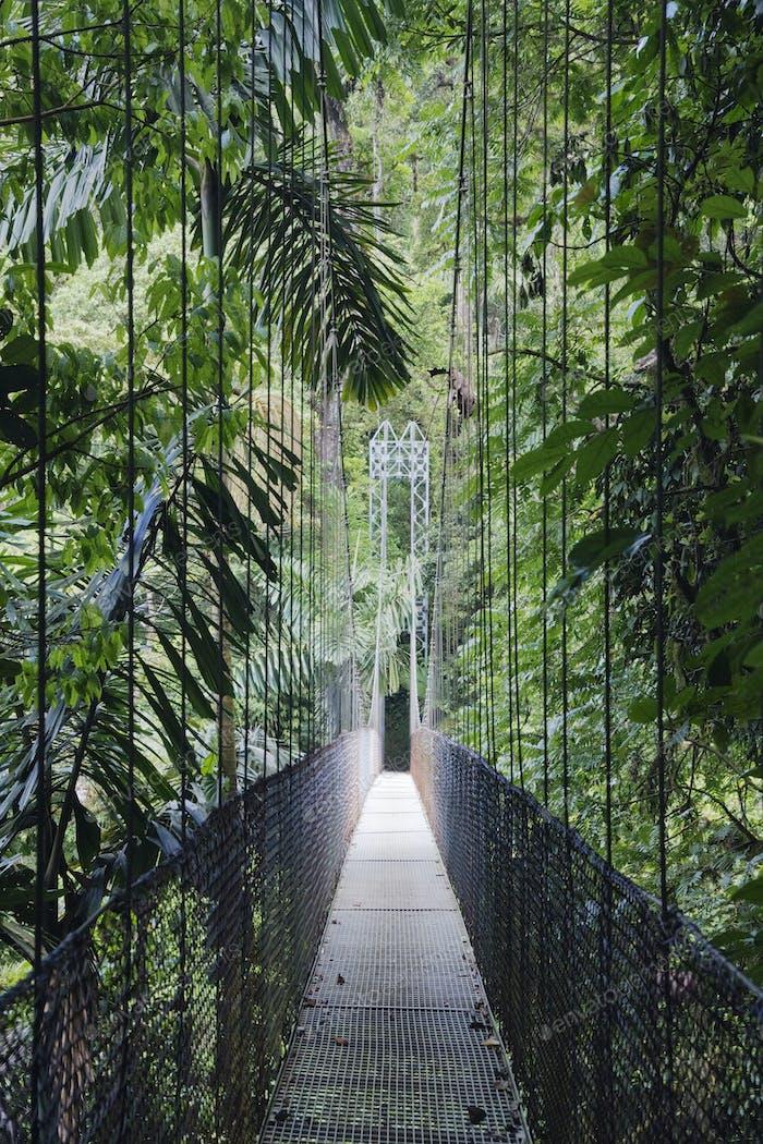 Footbridge in Costa Rican Forest