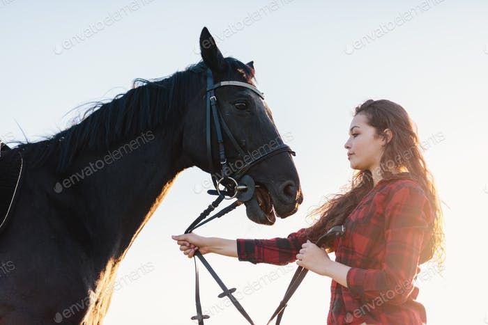 Young attractive girl holding a bay horse on a harness.