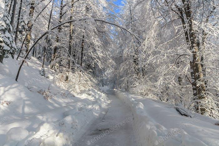 rustic road in winter