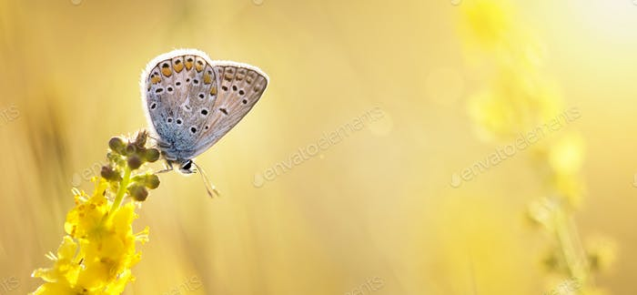 Summer, summertime background - butterfly sitting on a yellow fl