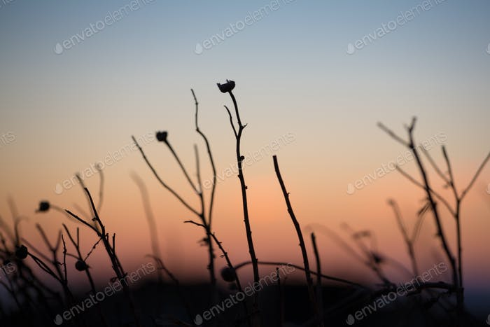 Nahaufnahme einer griechischen Pflanze bei Sonnenuntergang