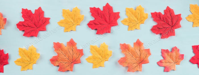 Colorful autumn maple leaves on turquoise. Pattern
