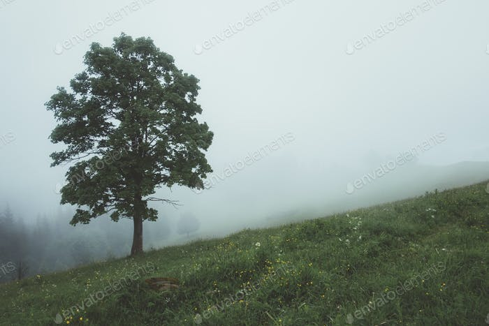 Alone tree in the fog