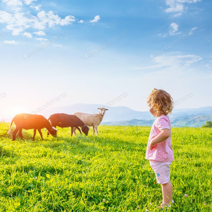 girl on meadow with sheep