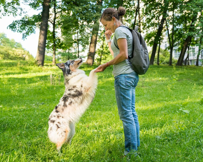 Playful trained mixed breed dog giving paw to happy middle aged woman during walk in park