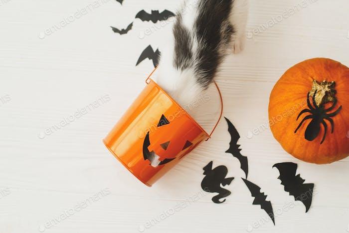 Katzenpfoten halten Jack o Laterne Süßigkeiten-Eimer auf weißem Hintergrund