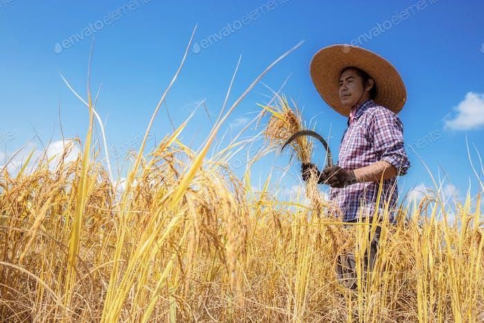 Farmers in fields at sunlight