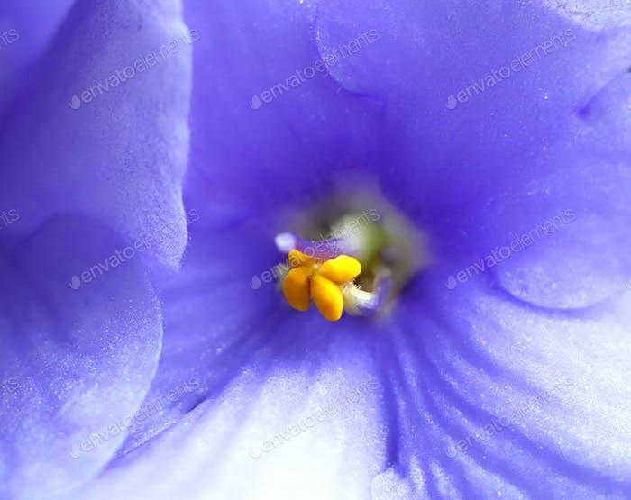 Schöne violette Blume