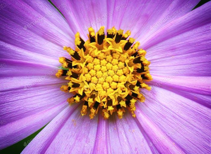 Makro aus Blume