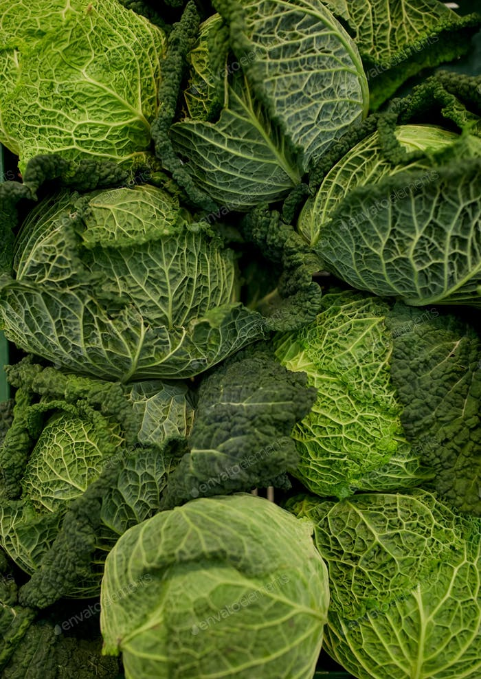 close up of savoy cabbages