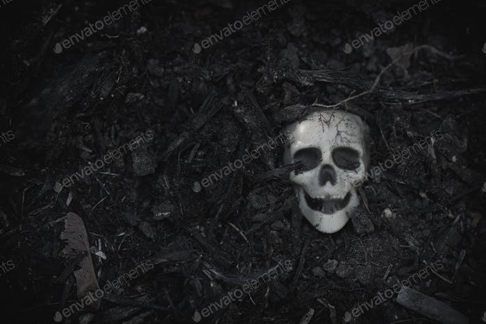 Human skull on ground