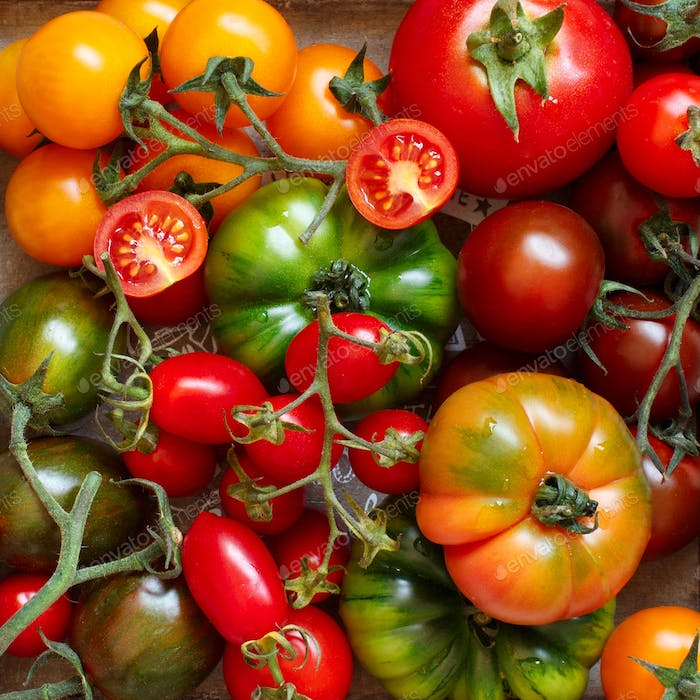 Colorful tomatoes on a wooden table