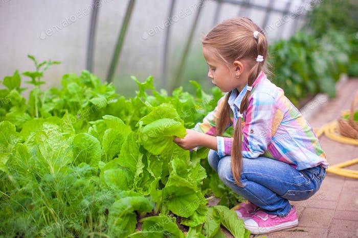 Adorable little girl harvesting in the greenhouse