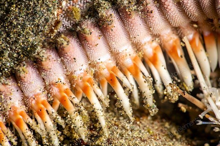 Starfish legs