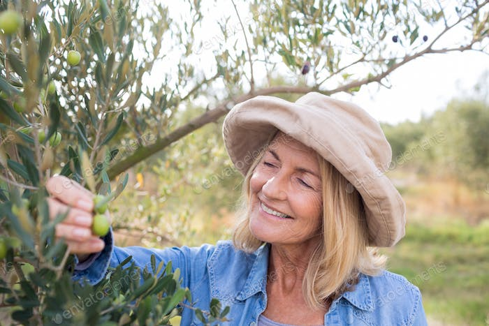 Thumbnail for Woman harvesting olives from tree