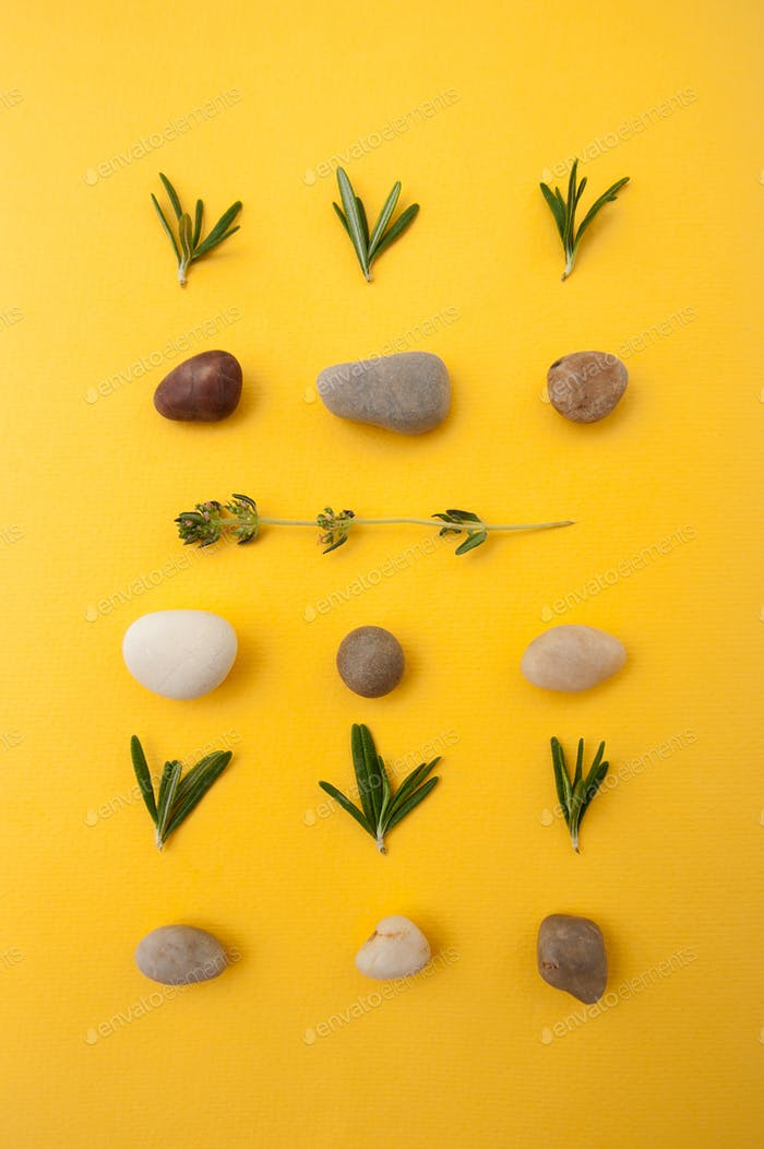Set of multicolored sea stones, leaves of fresh rosemary and thy