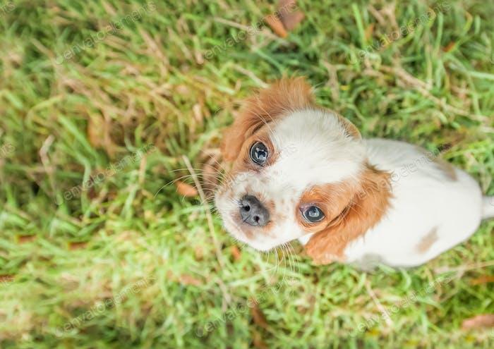 perro perro perro de aguas