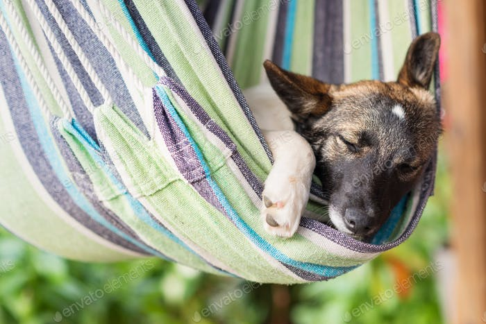 Close up of a happy dog sleeping in striped hammock.