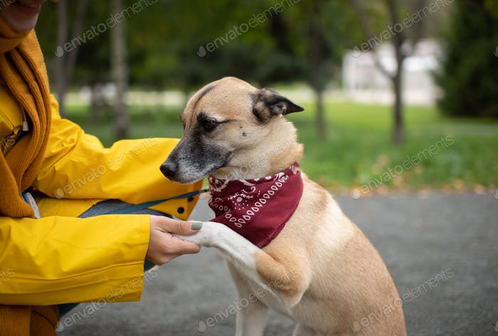 Crop woman training dog in park