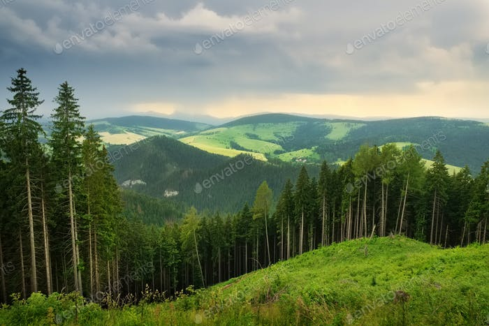 Tatra mountains landscape pine forest