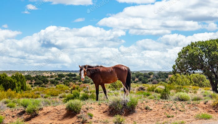 Wild horse inArizona, US of America. Canyon de Chelly area Arizona, USA
