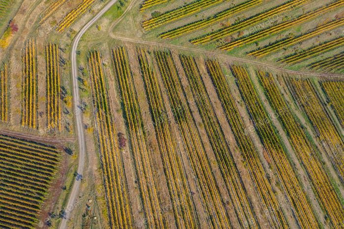 Aerial view of a vineyard plantation in late afternoon lights in Europe. Drone shot