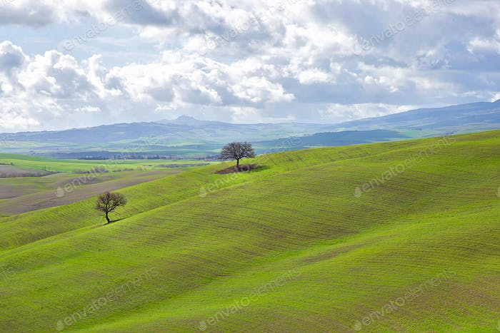 Green hills of Tuscany