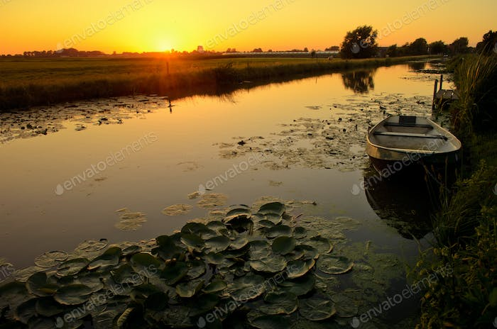 Sunset over a ditch with waterlilies