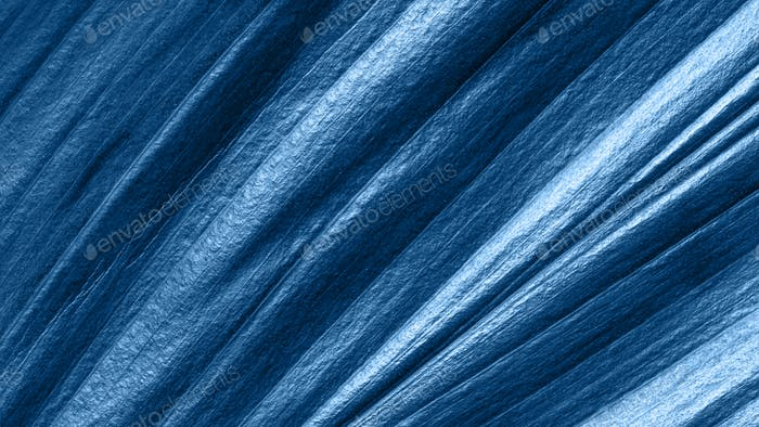 Tropical leaf toned in blue color 2020