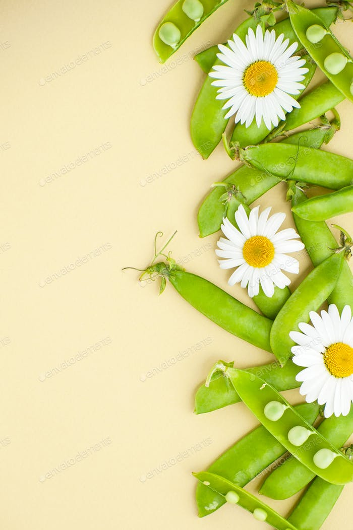 Young green peas and flowers Daisies on the right on a light yel