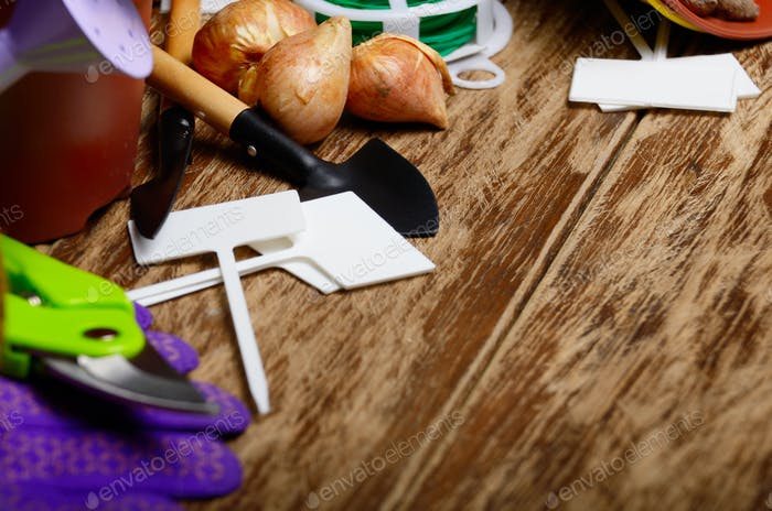 Gardening hobby tools for planting flowers on wooden floor