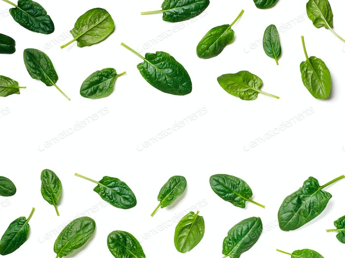 Pattern from baby spinach isolated