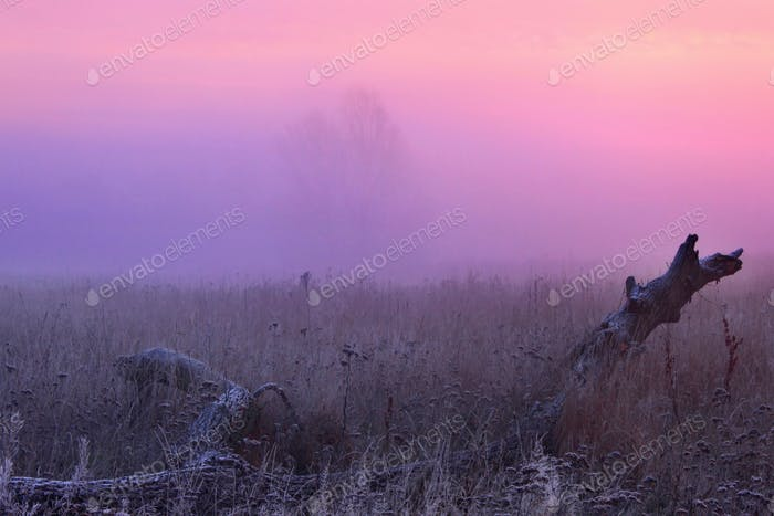 Misty sunrise with frost in early spring