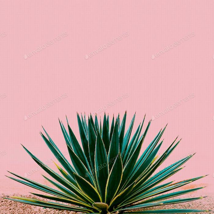 Plant on pink. Tropical design minimal fashion