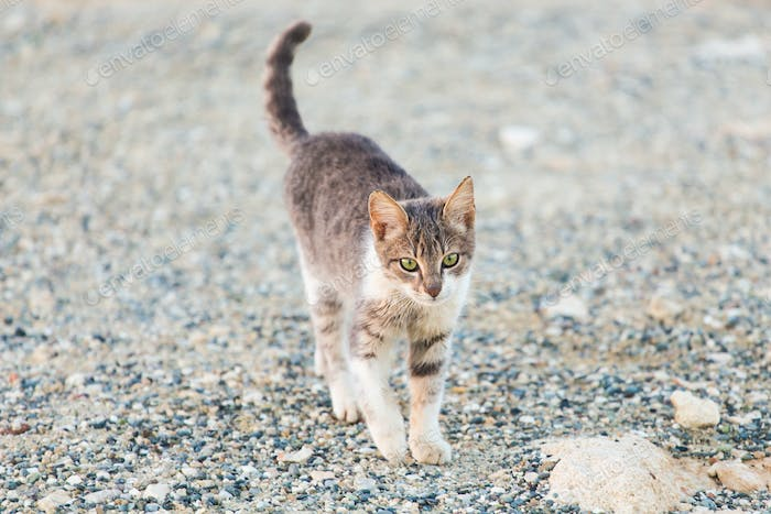 Concept of homeless animals - Stray cat on the street