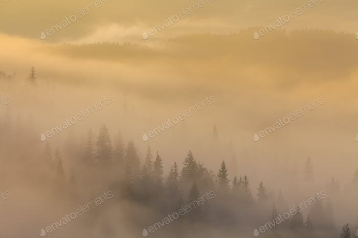 Amazing dense fog in the Carpathian Mountains. Ukraine