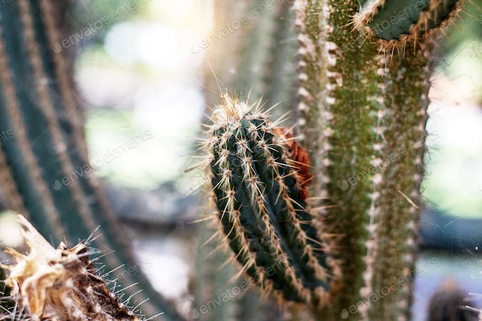 Cactus at a daytime