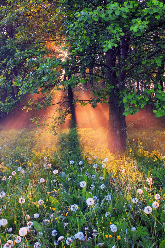 The rays of dawn sunlight illuminate the clearing with wildflowers