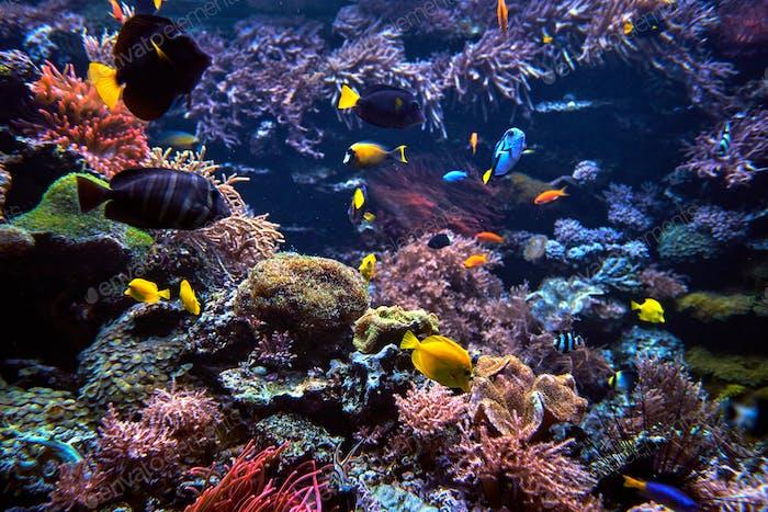 underwater background. Underwater scene. Underwater world. Under
