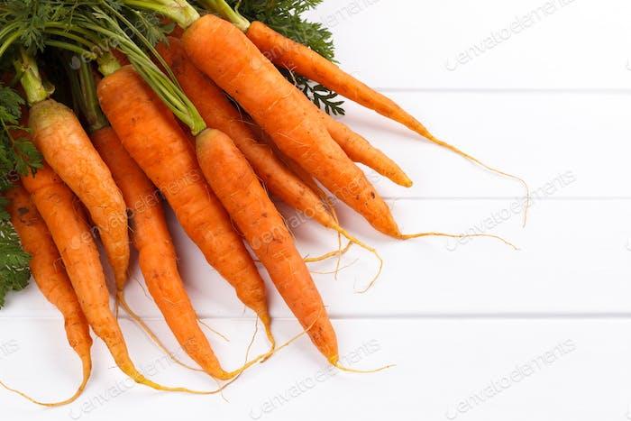 Bündel frisch geernteten Karotten